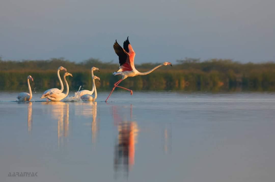સારસ અને બીજાં અઢળક પક્ષીઓ વિહરતાં જોવા મળશે