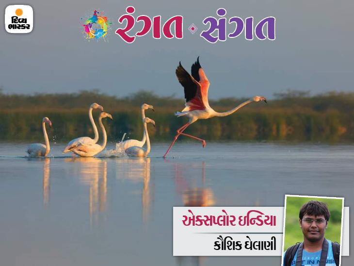 ગુજરાતની ધરા એટલે પ્રવાસી પક્ષીઓનું સ્વર્ગ - દેશવિદેશથી આવતાં પ્રવાસી પક્ષીઓનાં અનુઠા સ્થળો વિશે જાણીએ રંગત-સંગત,Rangat-Sangat - Divya Bhaskar