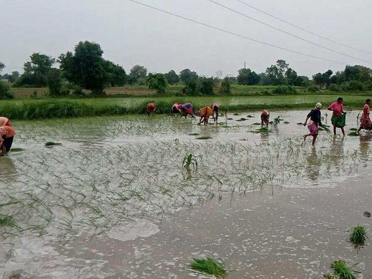ઉત્તર ગુજરાતમાં સિઝનનો 30.51% વરસાદ|મહેસાણા,Mehsana - Divya Bhaskar