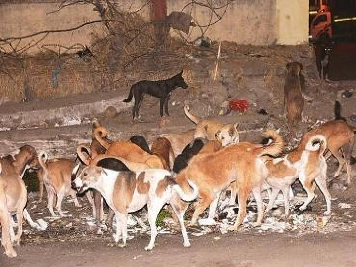 કૂતરાઓનો ફાઈલ ફોટો