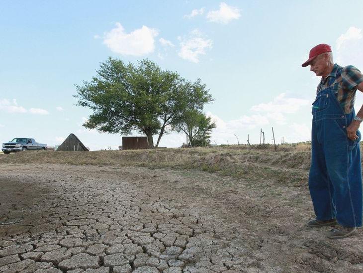 કેનેડામાં ભીષણ ગરમી પછી હવે દુકાળ, ખેડૂતોની આજીવિકા પર સંકટ, સેંકડો ગાય-બળદોની નિલામી|વર્લ્ડ,International - Divya Bhaskar