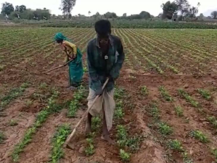 ખેડૂતોએ વાવેલો પાક સુકાઈ જવાની ચિંતા ( ફાઈલ ફોટો)