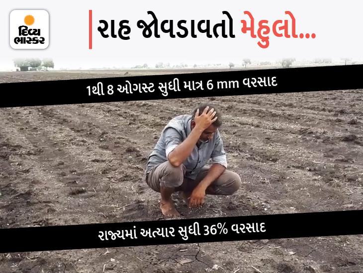 રાજ્યમાં ઓગસ્ટનું પહેલું સપ્તાહ કોરું ધાકોર, હજુ પણ 15 ટકા વરસાદની ઘટ, વરસાદ ખેંચાતા ધરતીપુત્રો ચિંતાતુર|અમદાવાદ,Ahmedabad - Divya Bhaskar