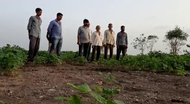 ખેડૂતો માટે ચિંતાનો વિષય બન્યો છે.