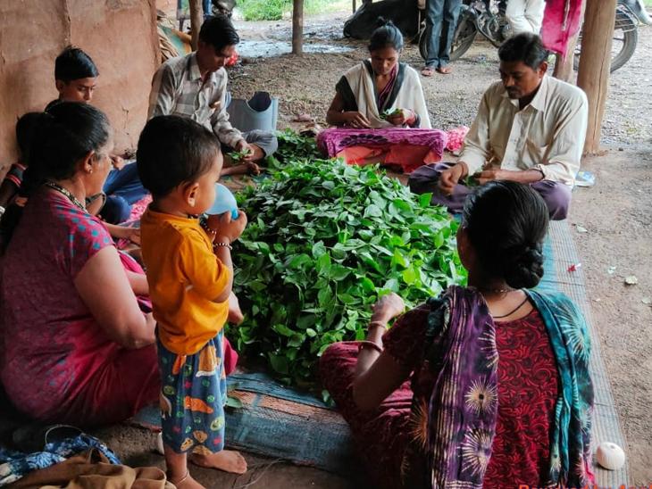 જંગલમાં બીલીપત્ર એકત્રિત કર્યા બાદ પરિવારો કામગીરી કરતા હોય છે. - Divya Bhaskar