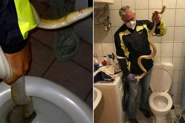 અડધી રાતે ફ્લશનો અવાજ સાંભળી વ્યક્તિ તપાસ કરવા બાથરૂમમાં ગયો, મસમોટો 6 ફૂટનો સાપ જોતાં જ દોટ મૂકી|લાઇફસ્ટાઇલ,Lifestyle - Divya Bhaskar