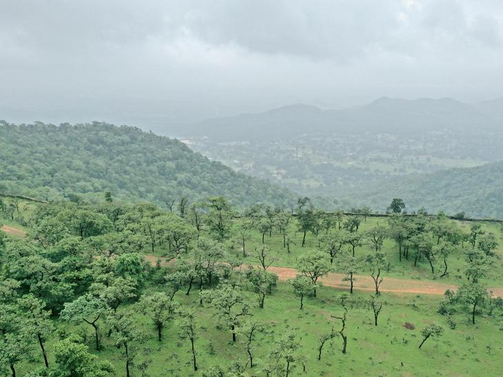 લીલીછમ વનરાજી - Divya Bhaskar