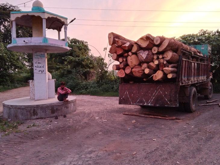 વિરપુરમાં લાકડા ભરેલ વાહનોની બિંદાસ થતી હેરાફેરી - Divya Bhaskar
