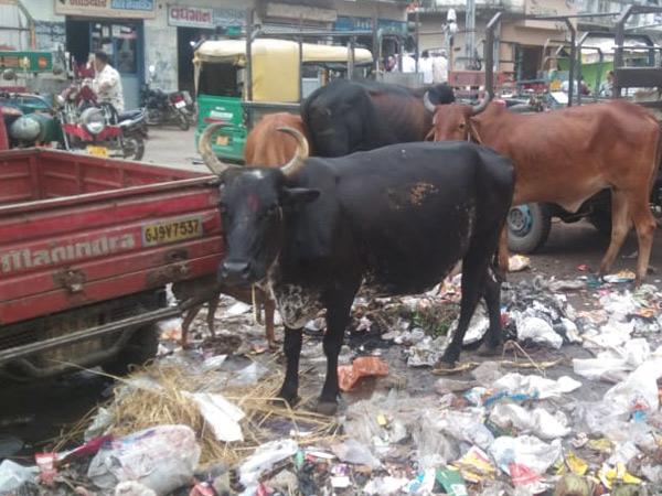 જેતપુરની મુખ્ય બજાર પાસે ગંદકી, કચરાના ઢગથી રોગચાળાની ભીતિ જેતપુર,Jetpur - Divya Bhaskar