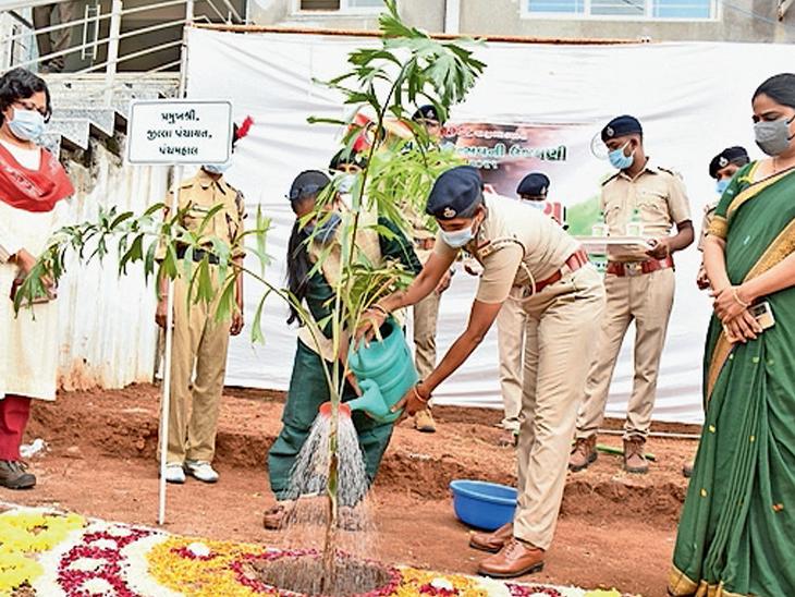 ગઢચુંદડી ખાતે ૭૨માં વન મહોત્સવની ઉજવણી કરવામાં આવી - Divya Bhaskar