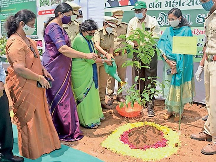 અટલાદરા સ્થિત સ્વામિનારાયણ મંદિર પરિસરમાં વૃક્ષારોપણ કરવામાં આવ્યું હતું. - Divya Bhaskar