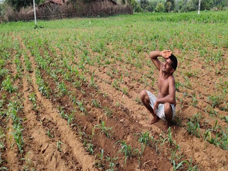 વરસાદ ખેંચાતા ખેડૂતોની મુશ્કેલીમાં વધારો,સૌરાષ્ટ્રમાં માત્ર 32.80% જ વરસાદ વરસ્યો, 9 તાલુકામાં 20%થી ઓછો વરસાદ,પાક નિષ્ફળ જવાનું જોખમ વધ્યું રાજકોટ,Rajkot - Divya Bhaskar
