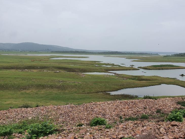7 વર્ષમાં ઓગસ્ટના 3 સપ્તાહમાં સૌથી ઓછો 1.5 ટકા વરસાદ|હિંમતનગર,Himatnagar - Divya Bhaskar