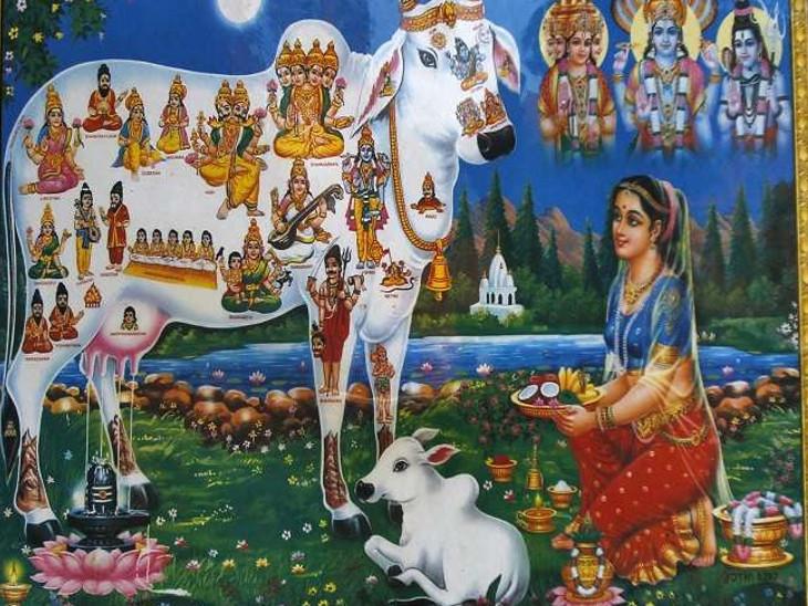 ગાયમાં 33 કરોડ દેવોનો વાસ હોવાથી અનેક જન્મનાં પાપોનો નાશ થાય છે. રીત-રિવાજ, માન્યતાઓને કે પછી પૌરાણિક કથાઓ જે હોય તે પરંતુ આજના દિવસે હજારોની સંખ્યામાં મહિલાઓ શ્રદ્ધાથી ગાયનું પુજન કરે છે