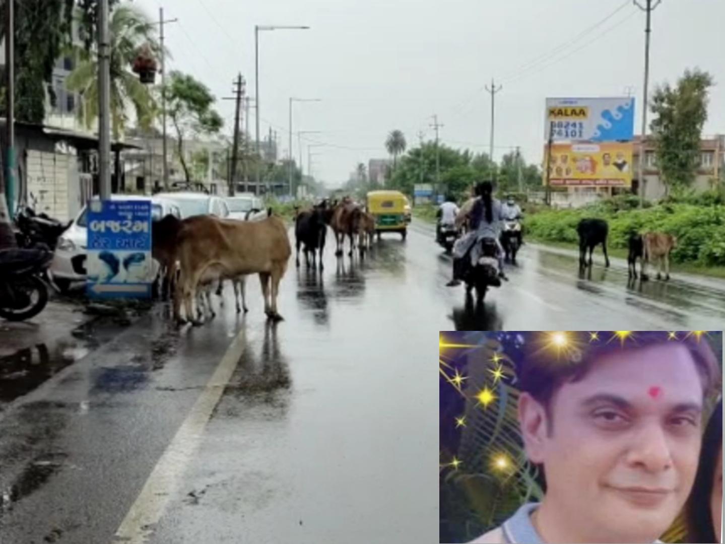 નવસારી શહેરમાં રખડતા પશુના કારણે વધુ એક અકસ્માત સર્જાયો, ઘાયલ યુવક પર ન્યુરો સર્જરી કરવી પડી|નવસારી,Navsari - Divya Bhaskar