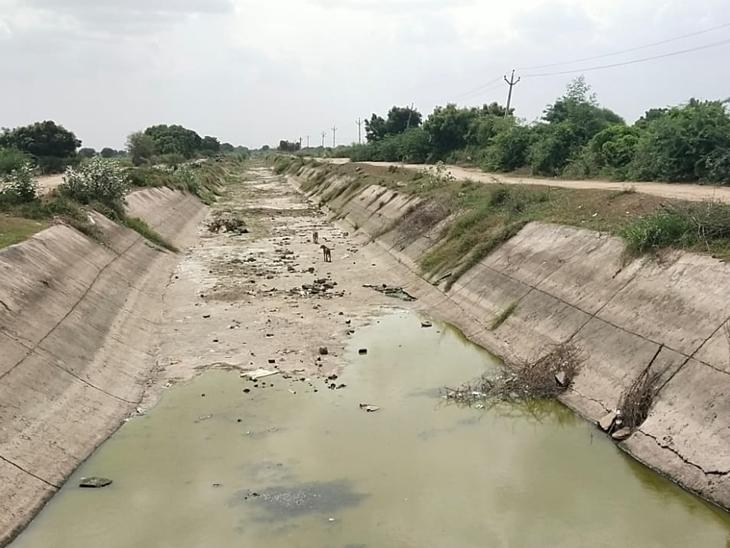 ફતેવાડી કમાન્ડ વિસ્તારમાં પાણી છોડો, ડાંગરનો પાક નિષ્ફળતાની આરે : તાત સાણંદ,Sanand - Divya Bhaskar
