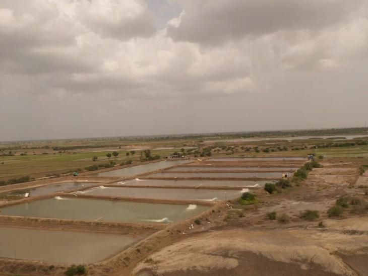 તરકપુરના કિસાનોએ સિંચાઈના પાણી માટે આંદોલનનું રણશિંગું ફૂંક્યુ છે. - Divya Bhaskar