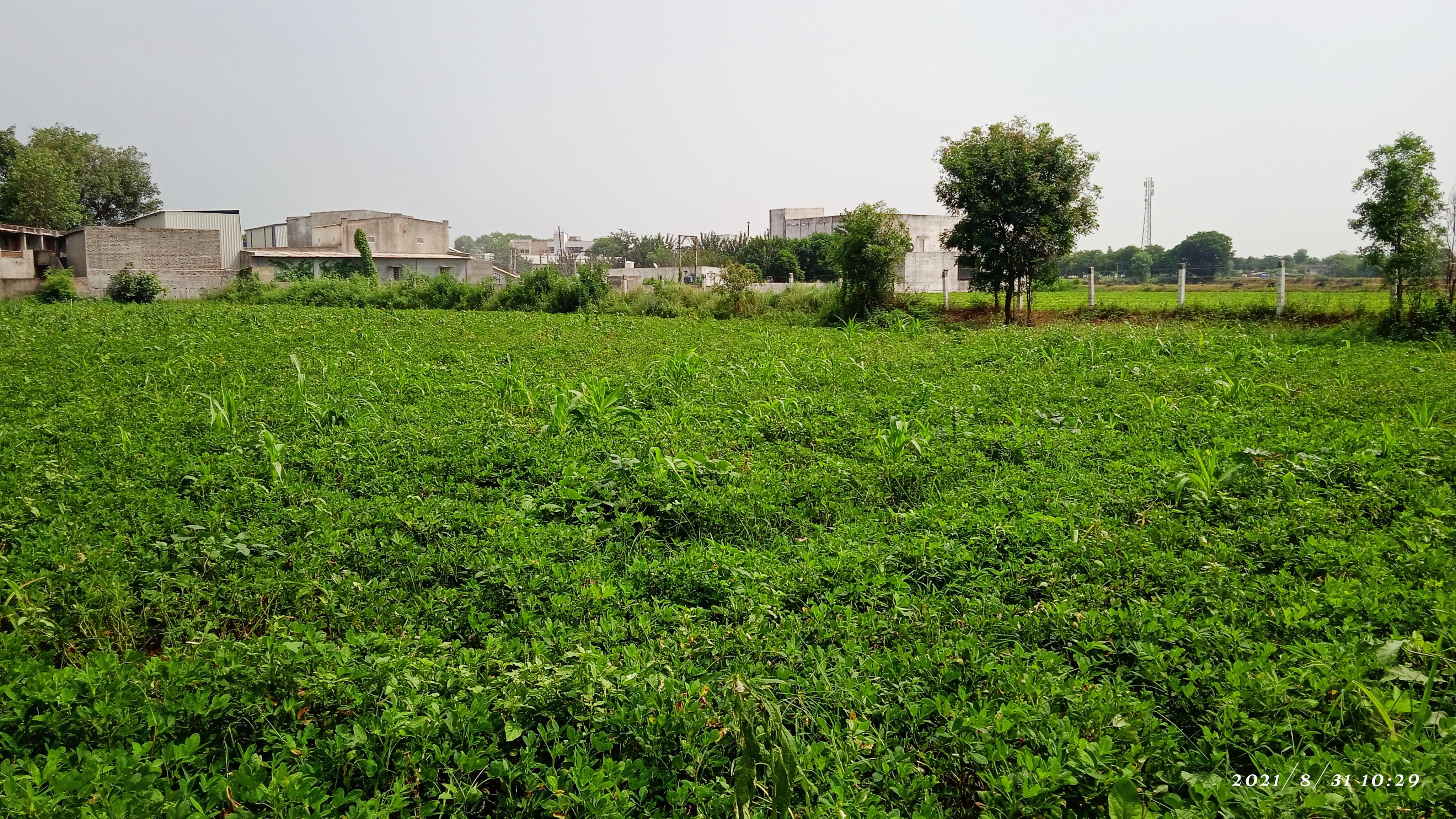 બનાસકાંઠા જિલ્લામાં લાંબા વિરામ બાદ 14 તાલુકામાં વરસાદ નોંધાયો, સૌથી વધુ પાલનપુરમાં પાલનપુર,Palanpur - Divya Bhaskar