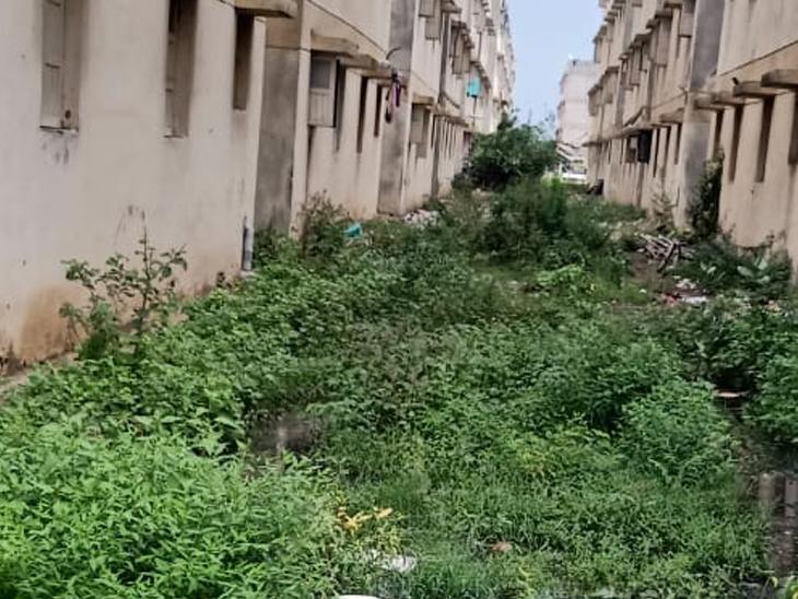 શહેરના સેક્ટર 25 વિવેકાનંદનગરમાં ગંદકીથી સ્થાનિકો ત્રાહિમામ પોકારી ગયા છે. - Divya Bhaskar