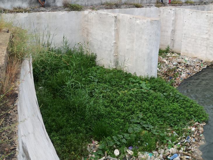 સાયફન નજીકનાં પુલ પાસે કચરો અને બિનજરૂરી વનસ્પતિની તસવીર. - Divya Bhaskar