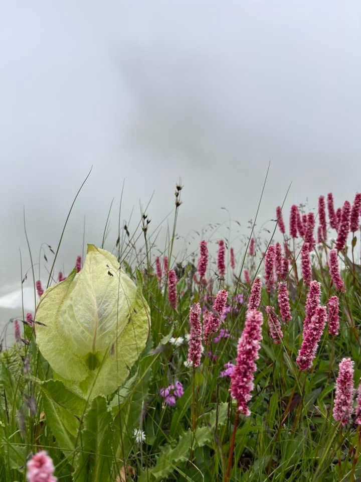આ વેલીમાં પાંચસોથી પણ વધુ પ્રકારનાં વિવિધરંગી ફૂલો જોવા મળે છે