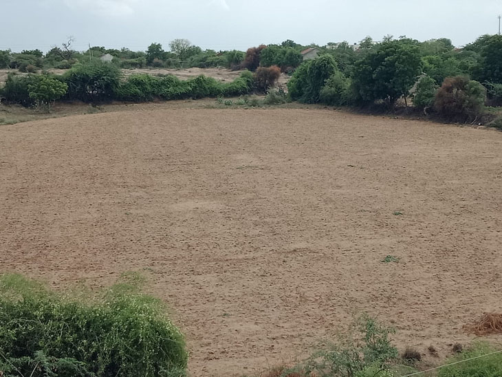 વાવમાં અઠવાડિયાથી વરસાદની હાથતાળી,માત્ર 14 મીમી વરસાદ|વાવ,Vav - Divya Bhaskar