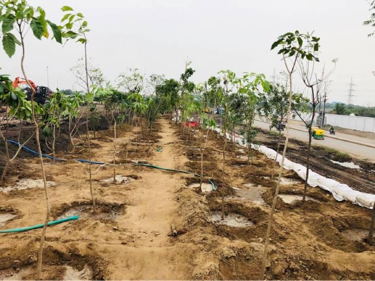 અમદાવાદમાં પ્રદૂષણ ફેલાવતી પીરાણા ડમ્પિંગ સાઈટ હવે શહેરને શુદ્ધ હવા પુરી પાડશે, વૃક્ષો વાવી ઓક્સિજન પાર્ક બનાવાયો અમદાવાદ,Ahmedabad - Divya Bhaskar