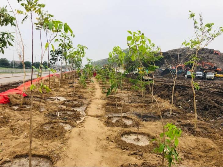 હજુ વધુ જગ્યા ખુલ્લી થશે તેમ વધુ વૃક્ષોનું વાવેતર કરાશે