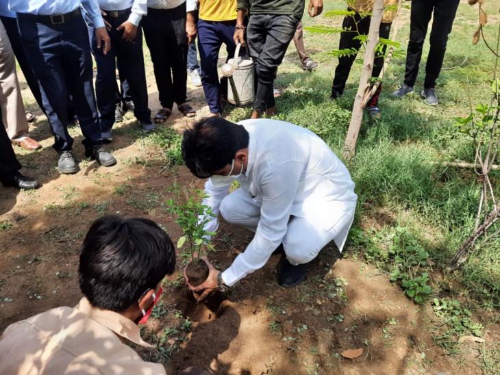 શહેરનું ગ્રીન કવર વધારવા 5.18 લાખ મોટાં, 4.88 લાખ નાના સહિત 10 લાખ વૃક્ષ વાવ્યાં|અમદાવાદ,Ahmedabad - Divya Bhaskar