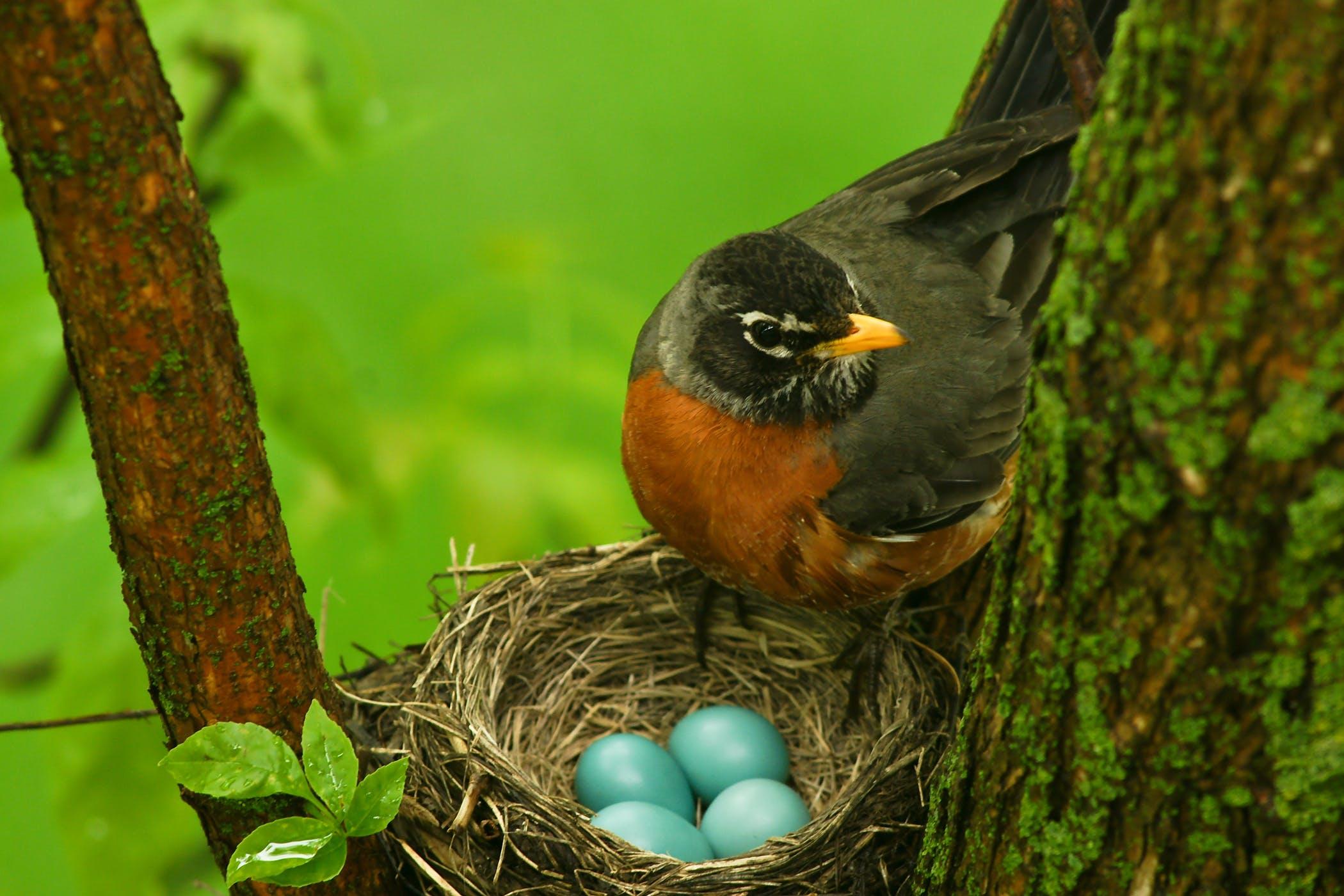 ઓસ્ટ્રેલિયાના સંશોધકોનું રિસર્ચ, પક્ષીઓને જન્મ પહેલાં જ પેરેન્ટ્સ પાસેથી કલરવ કરવાની ટ્રેનિંગ મળે છે, ઈંડાંનીઅંદર રહીને જ ભ્રૂણ બોલતા શીખે છે|લાઇફસ્ટાઇલ,Lifestyle - Divya Bhaskar