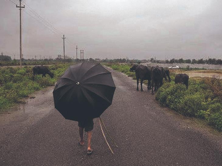 જુલાઈમાં 100 અને ઓગસ્ટમાં 380 મીમી ઓછો વરસાદ પડ્યો|રાજકોટ,Rajkot - Divya Bhaskar