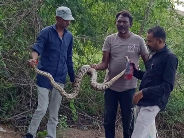 લાંબા અજગરને પકડી સલામત જગ્યાએ છોડી દેવાયો હતો. - Divya Bhaskar