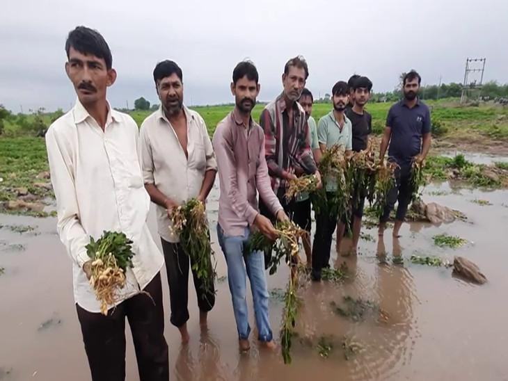 ઉપલેટામાં ધોધમાર વરસાદથી નદીઓમાં પૂર આવતા મગફળી, કપાસ સહિતના પાકને મોટો ફટકો, ચોમાસુ પાક નિષ્ફળ થવાની ભીતિ રાજકોટ,Rajkot - Divya Bhaskar