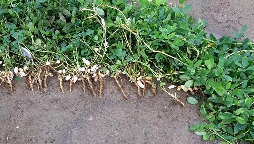 ખેડૂતોના ખેતરોમાં ભારે નુકશાની દ્રશ્યો સામે આવ્યા છે