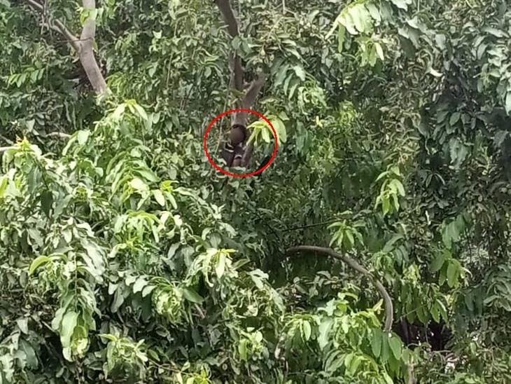 ઝાડ પર ઊંચે લટકીને યુવકે આપઘાત કર્યો હતો.