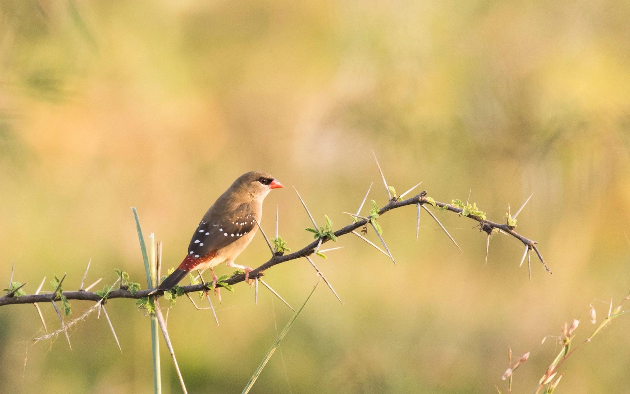 ફેબ્રુઆરી મહિનાના અંત સુધી અહીં વિવિધ પક્ષીઓ જોઈ શકાય છે