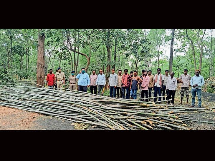 વિશ્વ વાંસ દિવસ નિમિતે છોટાઉદેપુર વન વિભાગની પ્રવૃતિઓ. - Divya Bhaskar