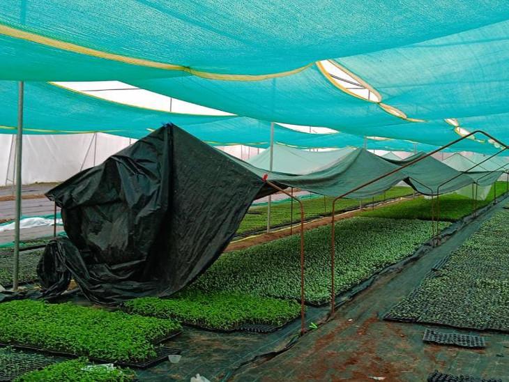 મયુર પ્રજાપતિએ Bsc એગ્રીની ડિગ્રી મેળવીને પોતાની ખેતીમાં પ્રયોગ શરૂ કર્યાં હતાં