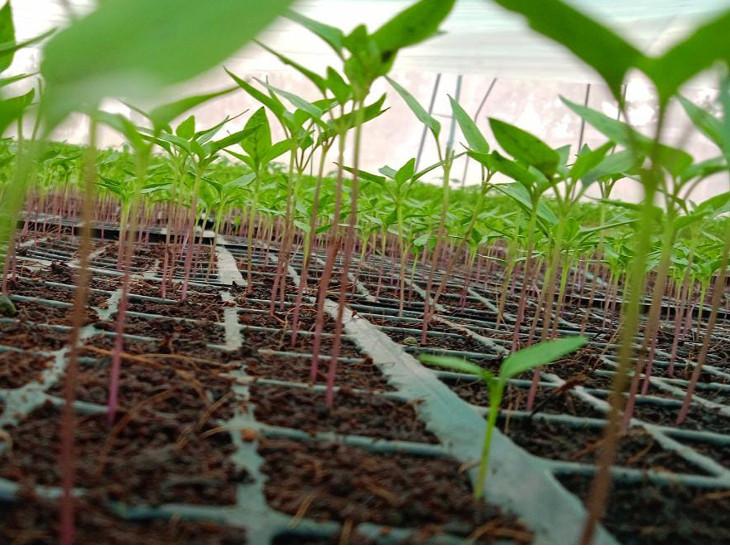 મયુર પ્રજાપતિએ તેના અભ્યાસનો લાભ લઈને પોતાના ખેતરમાં આધુનિક ખેતીની શરૂઆત કરી