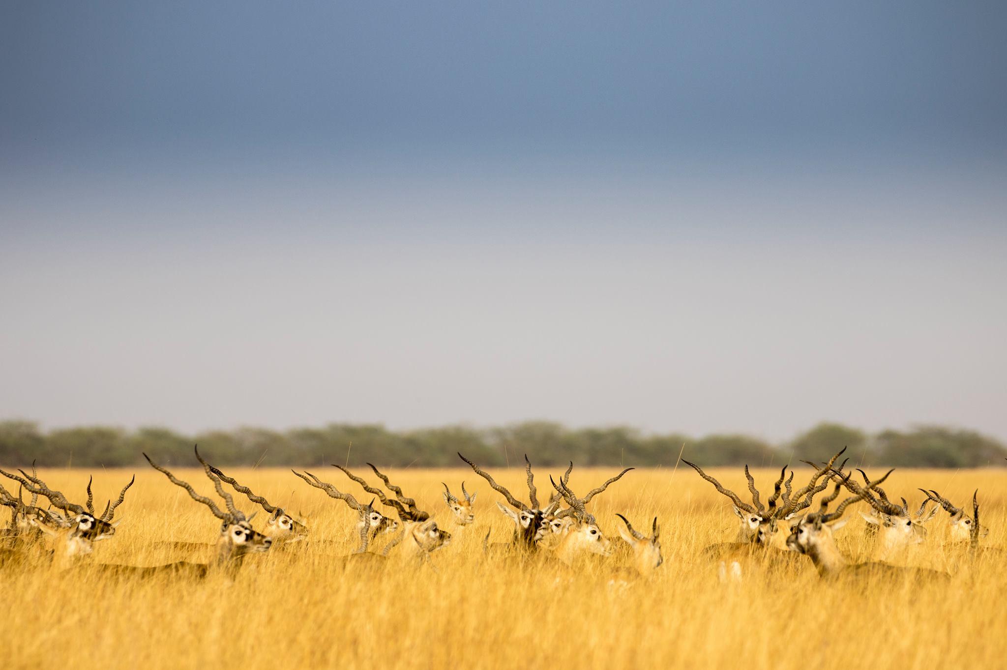 ભાવનગર નજીક આવેલા બ્લેકબક નેશનલ પાર્કમાં વિવિધ જાતનાં પ્રાણીઓ જેવાં કે, બ્લેકબક, વરુ, જંગલી બિલાડી, સાપ અને અઢળક શિકારી પક્ષીઓ જોઈ શકાય છે