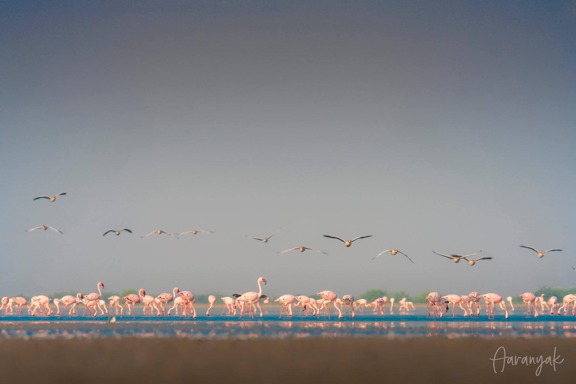 રામસર સાઈટ - વઢવાણા પક્ષી અભયારણ્યમાં વિવિધ જાતના વિદેશી પક્ષીઓનો મેળાવડો જામશે