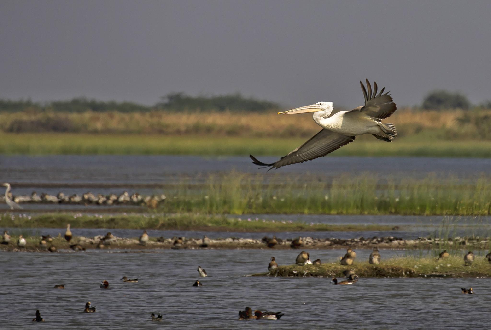 પક્ષીઓ નિહાળવા માટે ગુજરાતમાં વિવિધ જળ પ્વલિત વિસ્તાર આવેલા છે