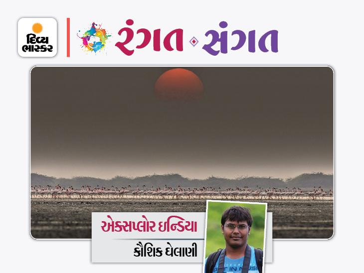 વાઇલ્ડલાઇફ વીક: ગુજરાતનાં વિવિધ સ્થળોએ મહાલતા વન્યજીવો અને પક્ષીઓને કંપની આપીએ|રંગત-સંગત,Rangat-Sangat - Divya Bhaskar