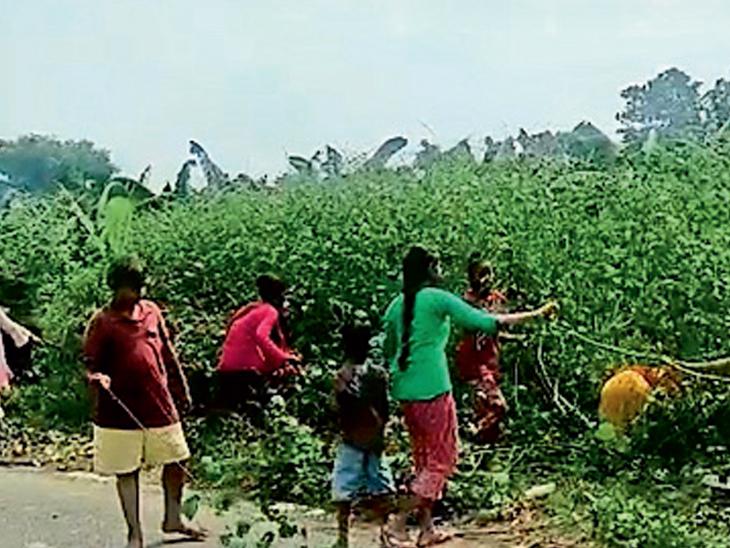 બોડેલીના ઢેબરપૂરાની છોકરીઓ શ્રમ દાન કરતી નજરે પડે છે - Divya Bhaskar