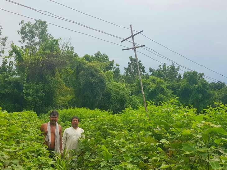 રાજપુરાના ખેડૂતના ખેતરમા વિજ વાયર નમી ગયા હોઇ વાસ પર લાકડી બાંધી વાયરો ઉંચા કરાયા છે. - Divya Bhaskar