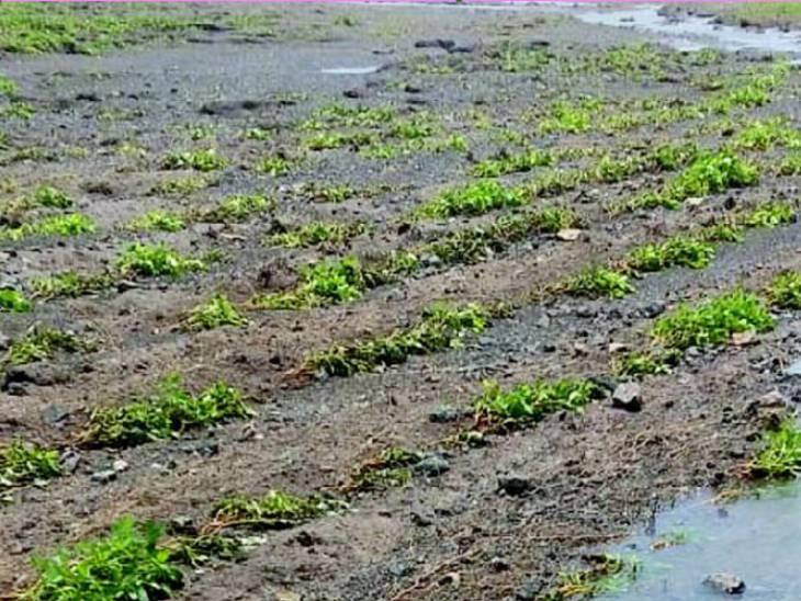તાઉ તે વાવાઝોડુ અને સપ્ટેમ્બરના ભારે વરસાદમાં ખેડૂતોનો પાક ધોવાયો