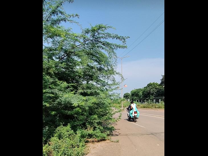 સોનગઢના દેવજીપૂરા વિસ્તારમાં રસ્તા નજીક ઊગી નીકળેલા ઝાડી ઝાંખરા. - Divya Bhaskar