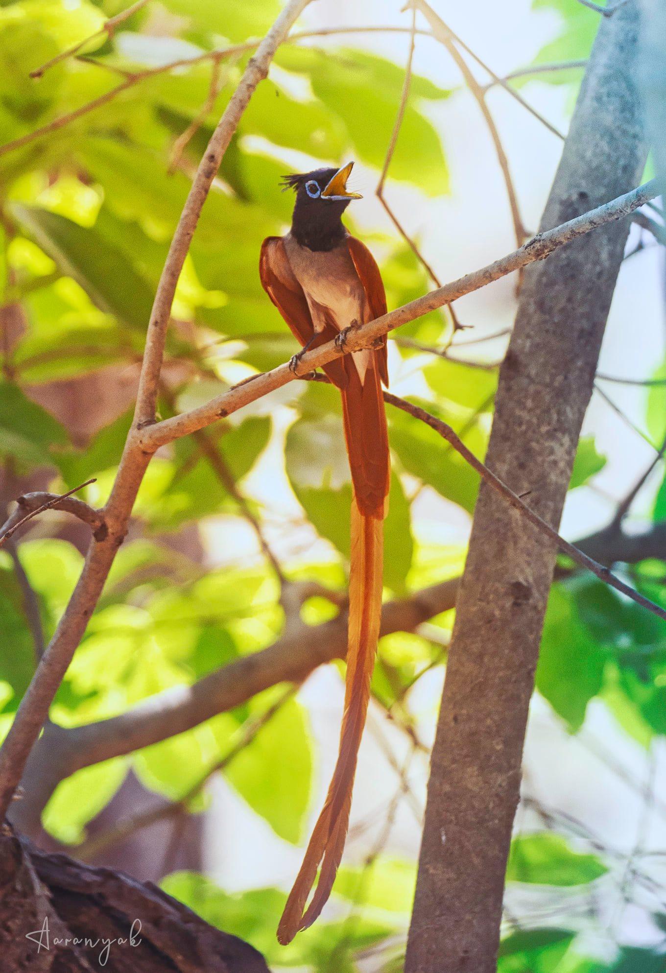 વિવિધ જાતનાં પક્ષીઓને માણવા માટે સમગ્ર ગુજરાત રાજ્યનાં પંથકમાં સાસણગીરથી સુંદર બીજી કોઈ જગ્યા નથી