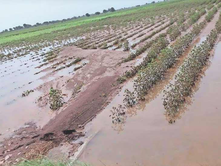વરસાદને પગલે થયેલા પાક નુકસાન સામે રાજ્ય સરકારે કૃષિ રાહત પેકેજ જાહેર કર્યું, 25 ઓક્ટોબરથી ઓનલાઈન અરજી કરવાની રહેશે|અમદાવાદ,Ahmedabad - Divya Bhaskar